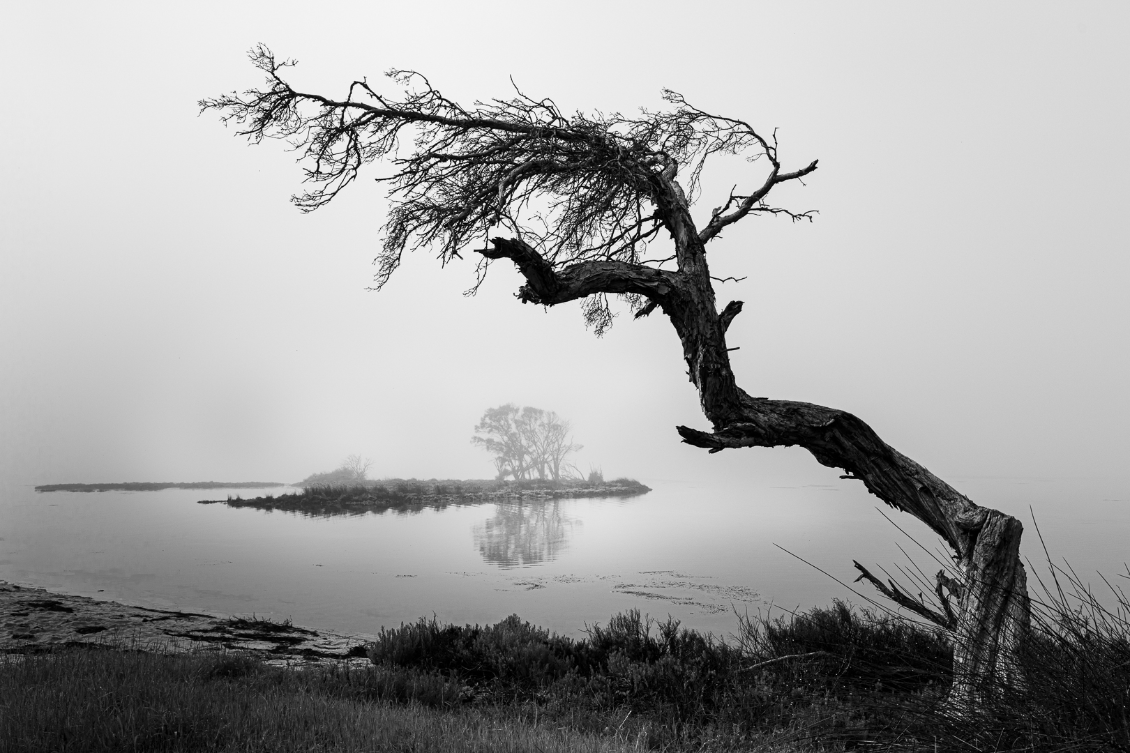 _84A4884_Foggy Island Point_WCC.jpg